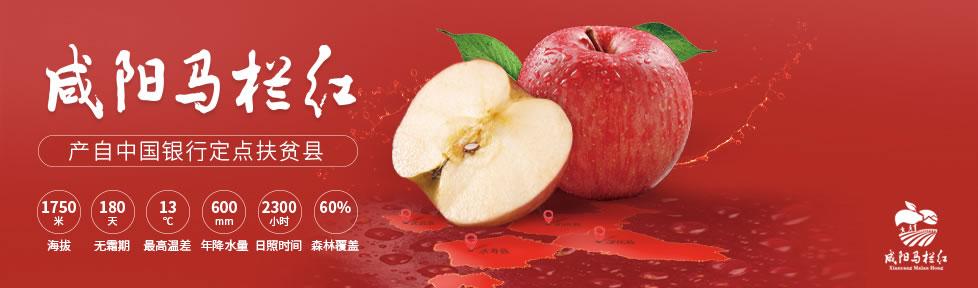 馬欄的蘋果,紅了!978x288.jpg